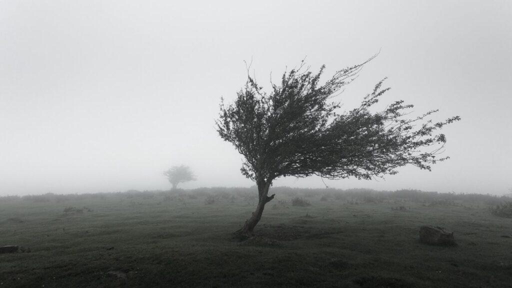 風になびく樹木